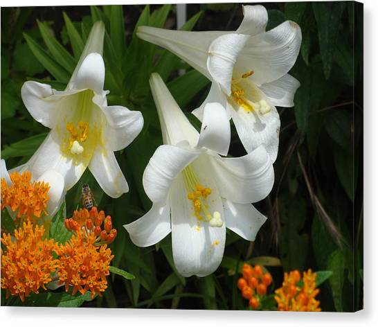 Easter Lilies And Butterfly Weed Canvas Print