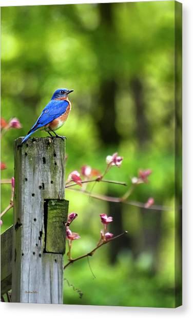 Bluebirds Canvas Print - Eastern Bluebird by Christina Rollo