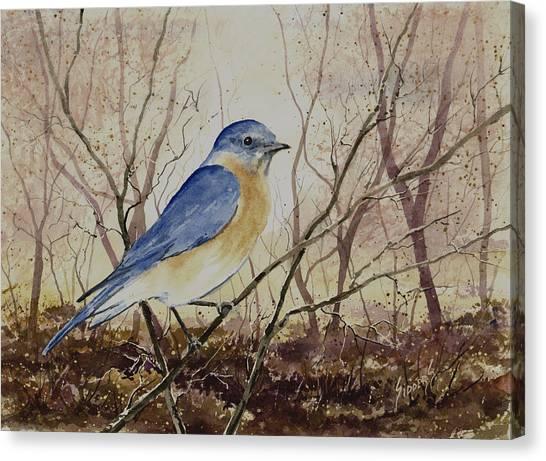 Bluebirds Canvas Print - Eastern Bluebird by Sam Sidders