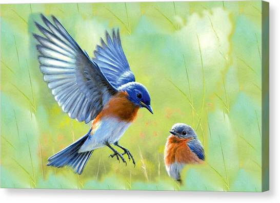 Macaws Canvas Print - Eastern Bluebird by Super Lovely