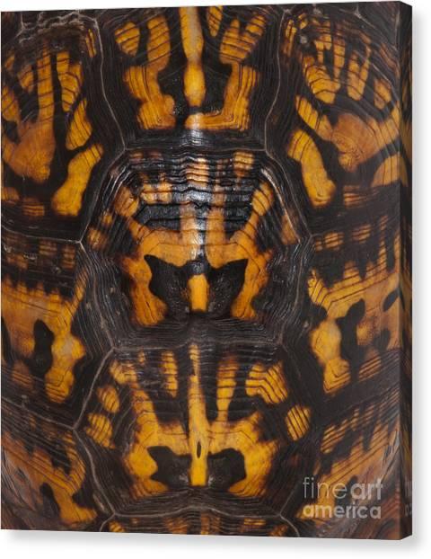 Box Turtles Canvas Print - Eastern Box Turtle, Shell Pattern by Scott Camazine