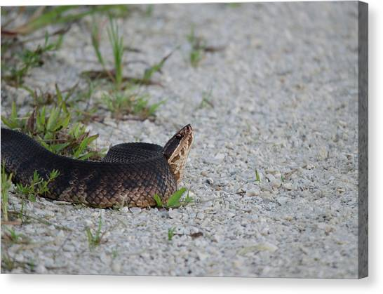 Cottonmouths Canvas Print - Eastern Cottonmouth by James Petersen