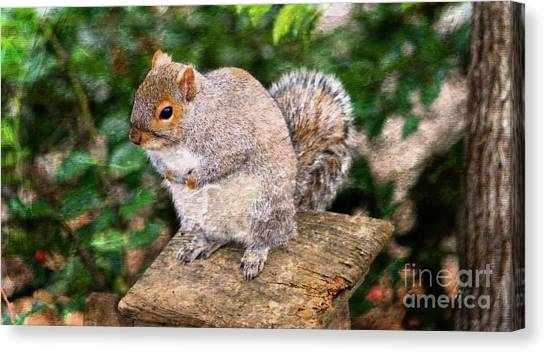 Canvas Print featuring the photograph Eastern Gray Squirrel by Michael Moriarty
