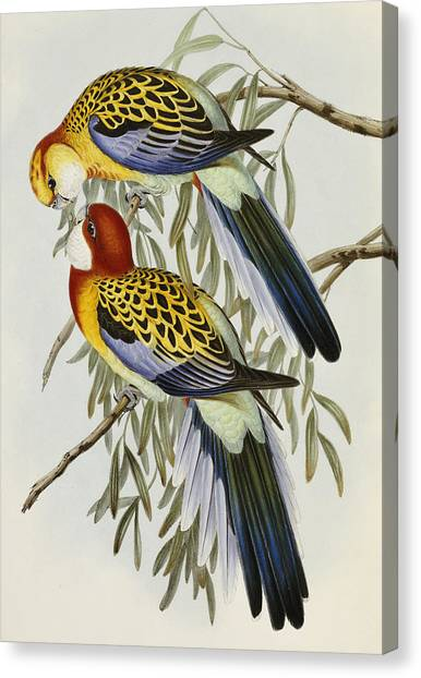 Parrots Canvas Print - Eastern Rosella by John Gould