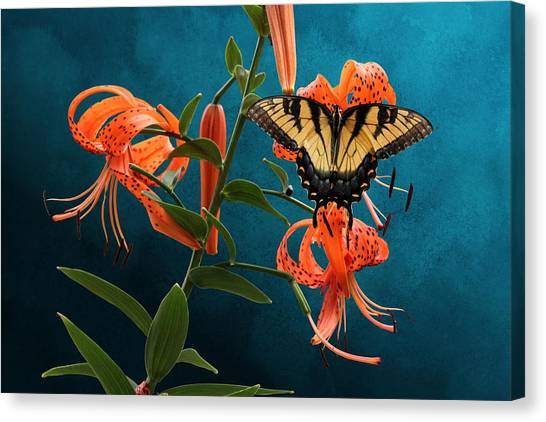 Eastern Tiger Swallowtail Butterfly On Orange Tiger Lily Canvas Print