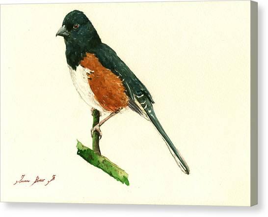 Small Birds Canvas Print - Eastern Towhee Bird by Juan  Bosco
