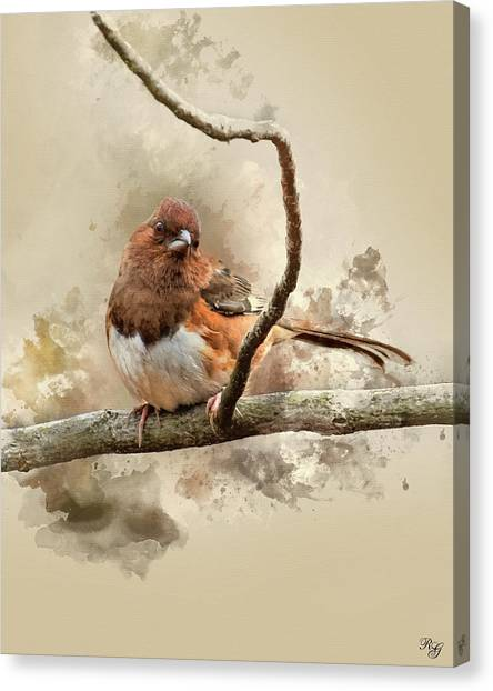 Brown Towhee Canvas Print - Bird Art - Eastern Towhee - Female by Ron Grafe