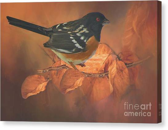 Brown Towhee Canvas Print - Spotted Towhee In Autumn by Janette Boyd