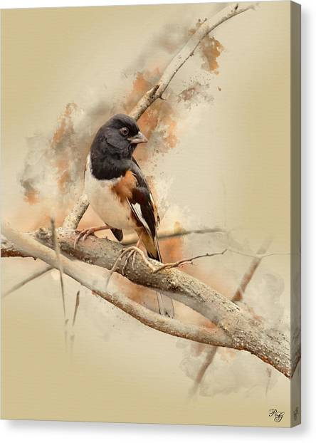 Brown Towhee Canvas Print - Bird Art - Eastern Towhee - Male by Ron Grafe