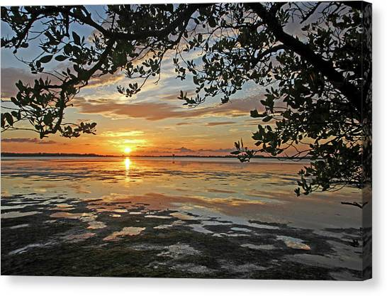 Mangrove Trees Canvas Print - Ebb And Flow by HH Photography of Florida