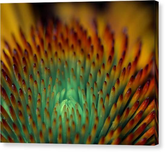 Echinacea Macro Canvas Print