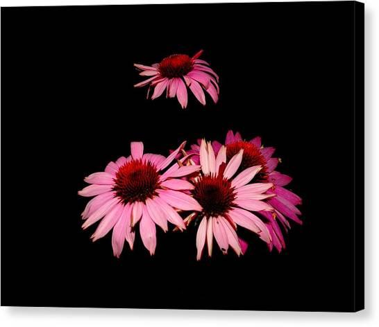 Echinacea Pop Canvas Print