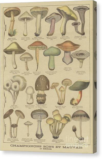 Shrooms Canvas Print - Edible And Poisonous Mushrooms by French School