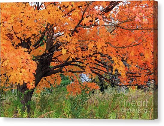 Edna's Tree Canvas Print