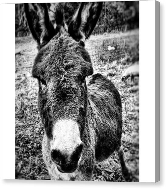 Farm Animals Canvas Print - Eeyore by Zoe Calvert