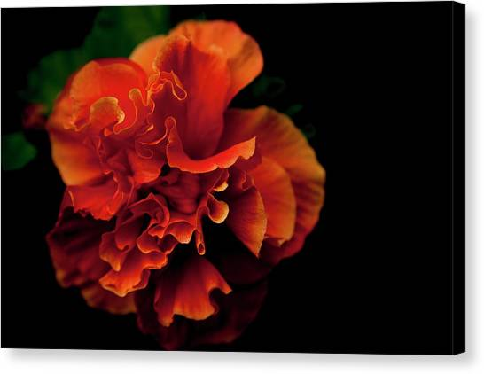 Efflorescence Canvas Print