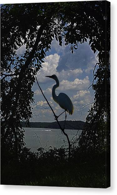 Brown Towhee Canvas Print - Egret Against Clowds by Ron Kruger