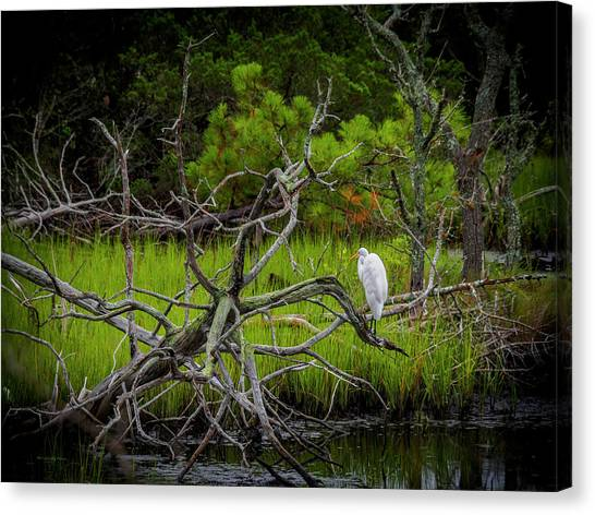 Egret At Pine Knoll 2 Canvas Print
