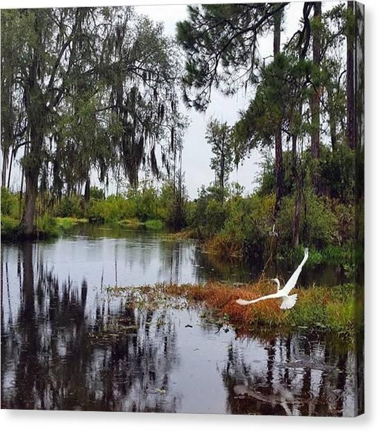 Okefenokee Canvas Print - Egret #bird #egret #animal #wildlife by Karen Breeze