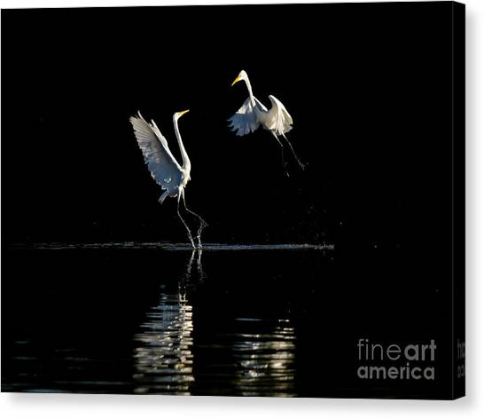 Egret Dance II Canvas Print by Emily Bristor