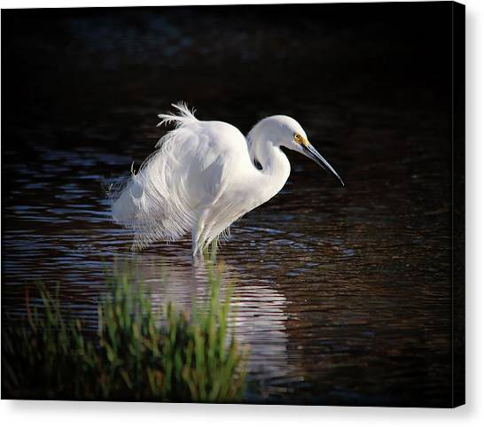 Canvas Print featuring the photograph Egret by Elaine Malott