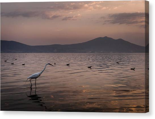 Egret Fishing In Lake At Sunset Canvas Print by Dane Strom