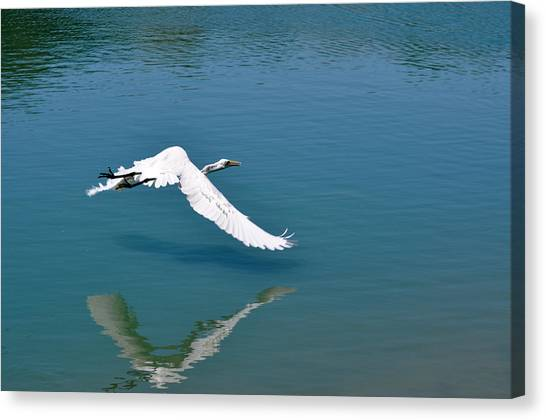Egret Flying Canvas Print by Teresa Blanton