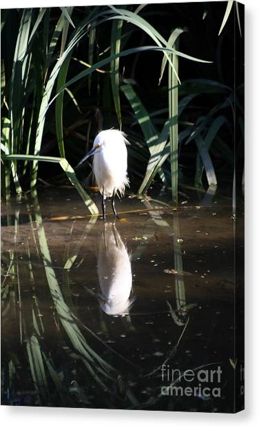 Egret In Reed Canvas Print
