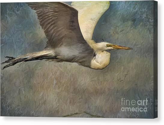 Egret Journey Canvas Print