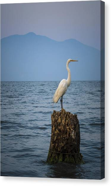 Egret On Tree Stump At Lake Chapala Canvas Print by Dane Strom
