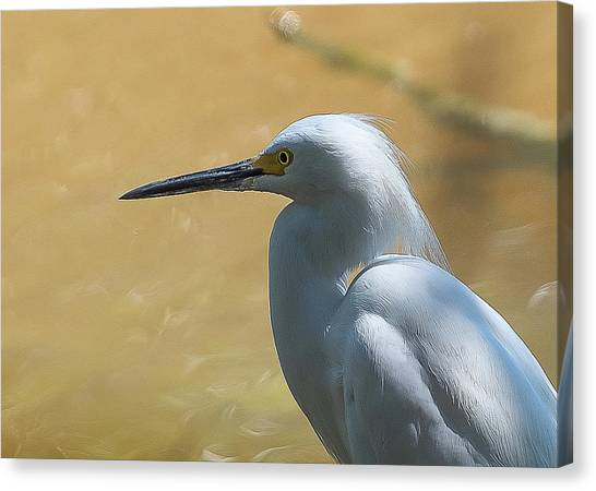 Egret Pose Canvas Print