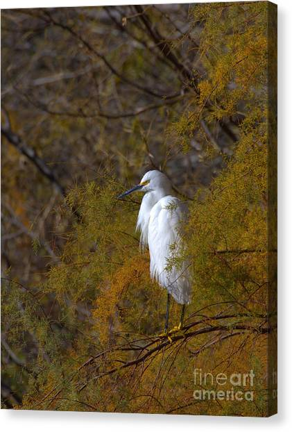 Egret Surrounded By Golden Leaves Canvas Print