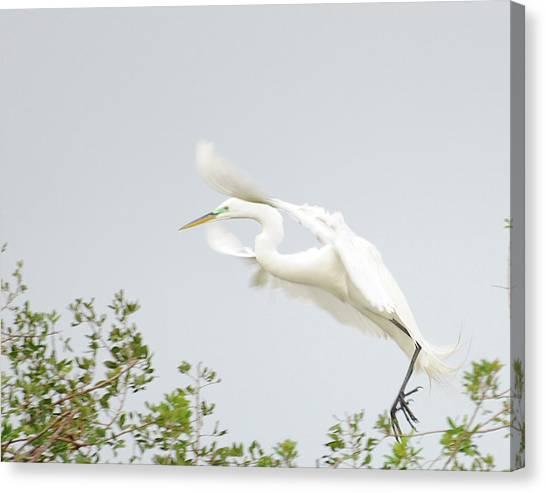 Egret-taking Flight Canvas Print by Keith Lovejoy