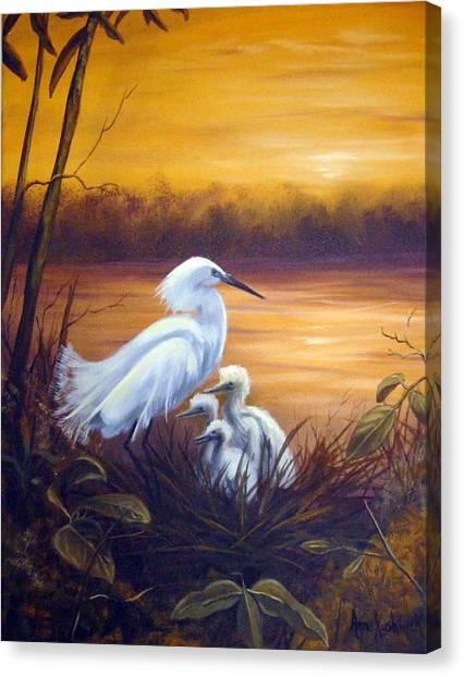 Canvas Print - Egret With Chicks by Anne Kushnick