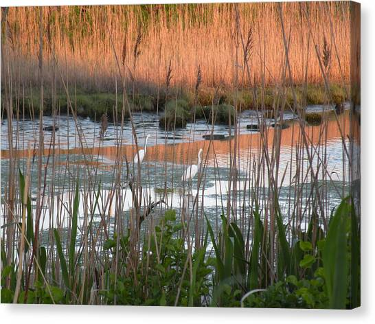 Egrets At Sunrise Canvas Print by Donald Cameron