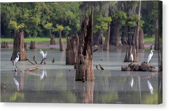 Atchafalaya Basin Canvas Print - Egrets In The Bayou by Susan Rissi Tregoning