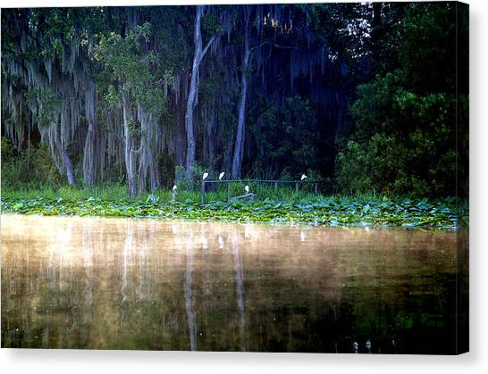 Egrets On A Fence Canvas Print