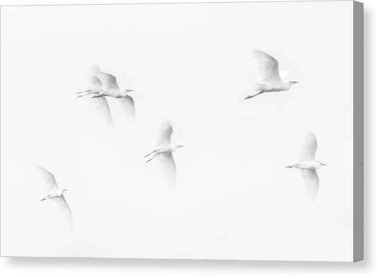 Egrets White On White B/w Canvas Print