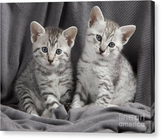 Egyptian Maus Canvas Print - Egyptian Mau Kittens by Jean-Michel Labat
