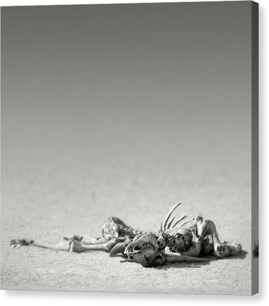 Skeletons Canvas Print - Eland Skeleton In Desert by Johan Swanepoel