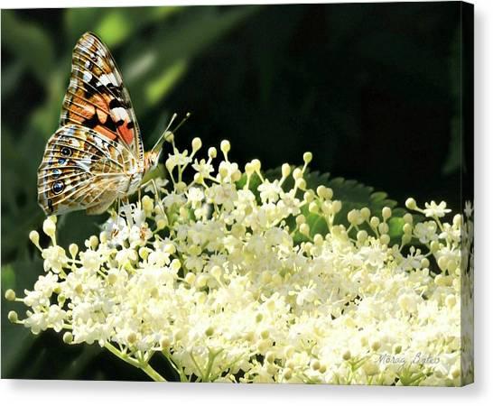 Elderflower And Butterfly Canvas Print