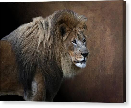 Canvas Print featuring the photograph Elderly Gentleman Lion by Debi Dalio