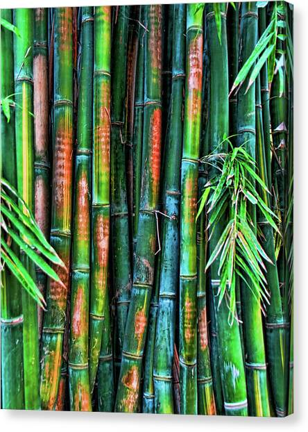 Electric Bamboo 6 Canvas Print