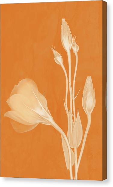 Elegance In Apricot Canvas Print