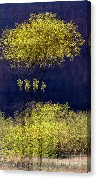 Elegance In The Park Horizontal Adventure Photography By Kaylyn Franks Canvas Print