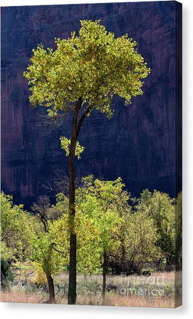 Elegance In The Park Utah Adventure Landscape Photography By Kaylyn Franks Canvas Print