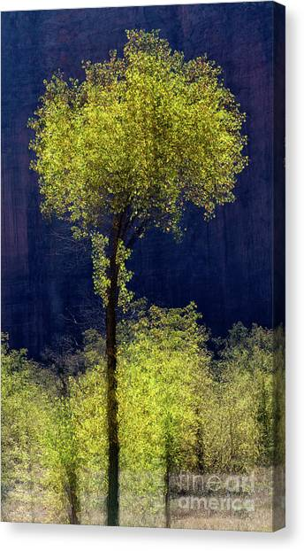 Elegance In The Park Vertical Adventure Photography By Kaylyn Franks Canvas Print