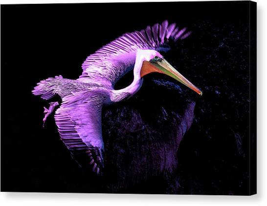 Elegant Flight In Violet Canvas Print