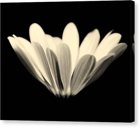 Elegant Canvas Print by Julie Lueders