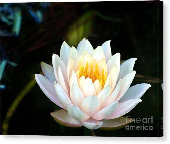 Elegant White Water Lily Canvas Print